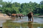 Thailand - Diervriendelijk - Elephants World Kanchanaburi