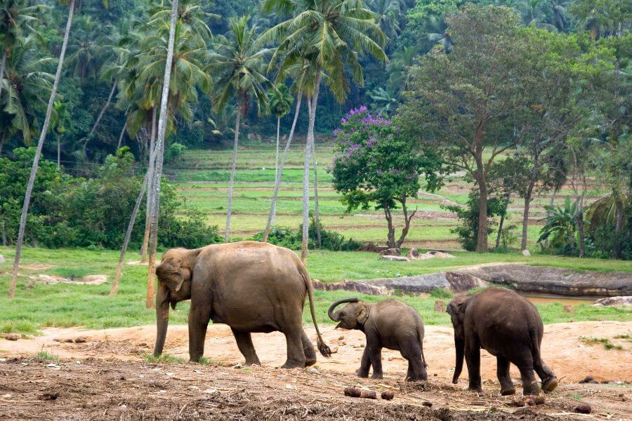 Thailand - Olifanten - 2-Daagse Familie Jungletour
