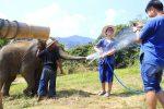Thailand - Chiang Mai - Olifanten trainer voor 1 dag - 01